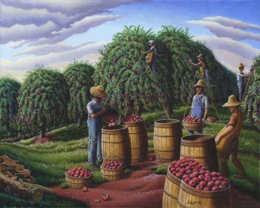 Harvesting Apple