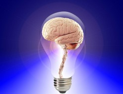 7 Amazing Facts About Your Brain You Must Know
