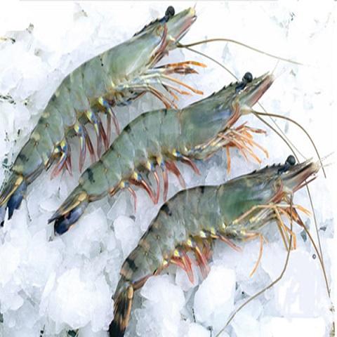Fresh Head-on Tiger Shrimp