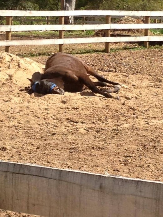 Sunbathing or colic? In this case he was just relaxing in the sun!