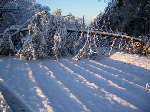 Weather causes many problems, including downed electrical lines