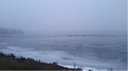 birds sitting on frozen lake