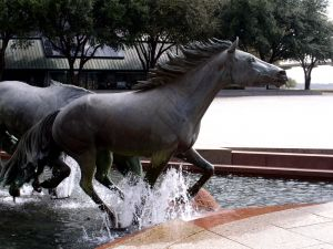 Mustangs at Las Colinas, Irving T,  home to a world recognized equestrian center and polo club. Other attractions include water and amusement parks, the ballet, theaters, symphonies, art museums and Pro Sports in football.