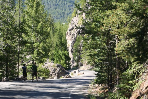 Road along the Firehole River Swimming Area