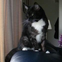 Spatz Our Cat