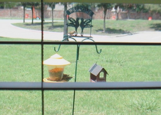 A bird feeder outside a bedroom window provides hours of visual enjoyment.