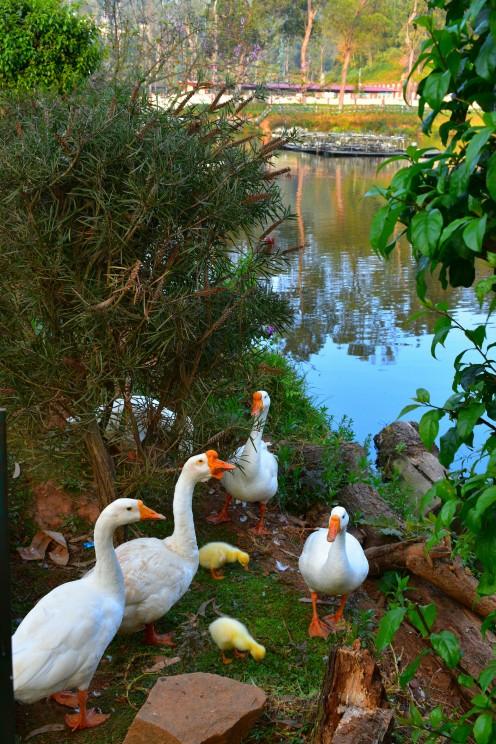 Wellington Lake, Coonoor