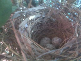 First photo taken of Nest