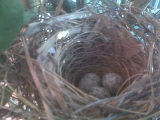First photo taken of Nest