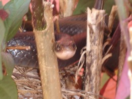 The snake looks menacing but I didn't feel threatened