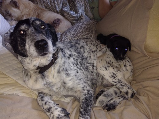 Pepper with her new adopted baby, Bella.