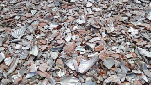 The photo above shows crushed oyster shells. They make a great amendment to any soil structure and acts as natural lime which helps balance PH. It is used mainly as a calcium additive. Oysters are mined which takes away veganic classification.
