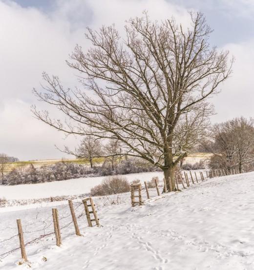 A frozen field