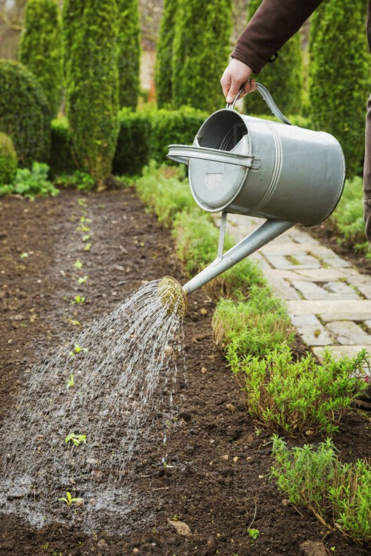 Water is vital to your plants life. However, over-watering and under-watering have very bad adverse effects.