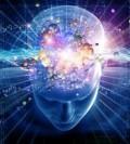 The Brain's