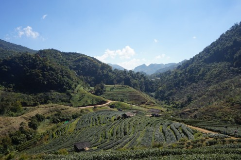 Up in the Peaks of Doi Ang Khang