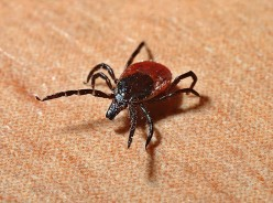 Key Information About Lyme Disease