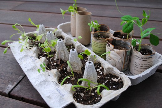 you can start growing your own simple vegetable garden even in your balcony...