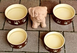 Selecting the Best Dog Bowls or Dishes