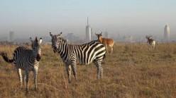 The Kenyan Beauty Through Mombasa, Nairobi to Maasai Mara.