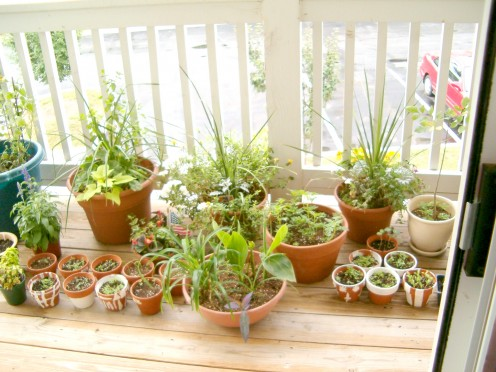 Porch with herbs growing