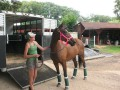 Horses With Trailer Loading Issues