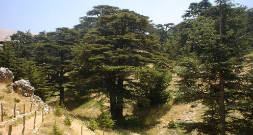 Cedars of Lebanon; El-Arz, Bsharri, Lebanon.