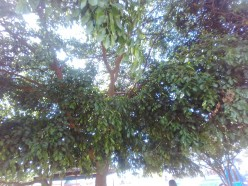 Tree and Its Products