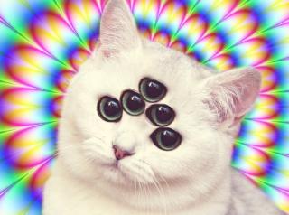 Trippy Cat!
