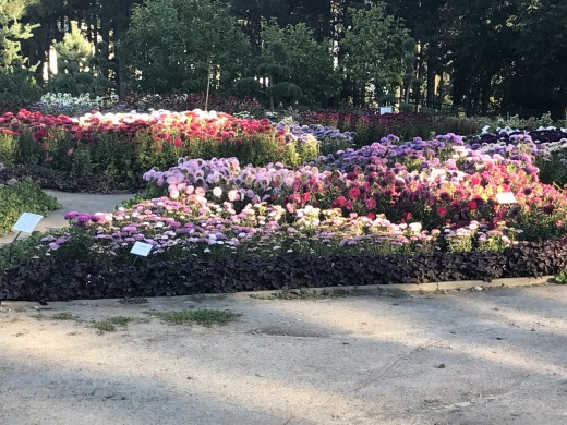 Flower Garden - M.M. Hryshko National Botanical Garden