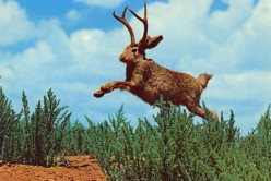 Legends and Lore: The Jackalope