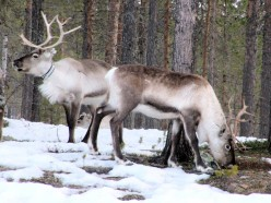Arctic Environment &  Land Degradation Issues