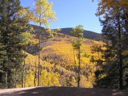 """""""Aspen Vista"""" is one of my favorite hiking trails. It's just minutes from the Plaza and offers stunning views. This photo was taken in early October when the aspens where in full color."""