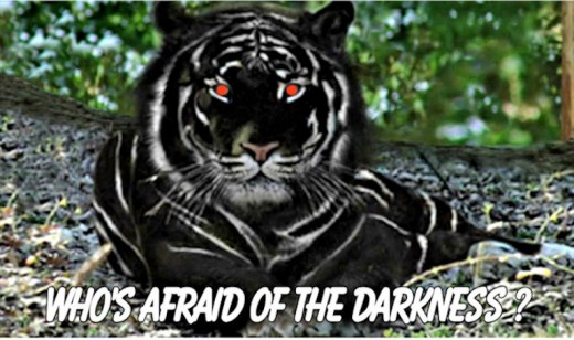 A Black Tiger! Extremely rare and very dangerous …