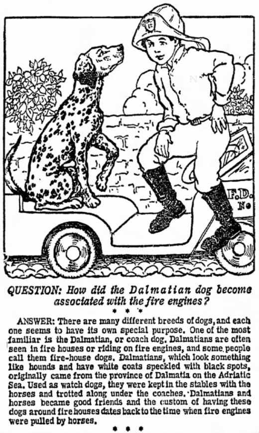 CLIPPED FROM The Progress  Clearfield, Pennsylvania 28 Apr 1959, Tue  •  Page 11 Some fire departments still keep a dalmatian as a mascot. Since motorized fire engines are too fast for the dog to keep up with, the dogs no longer go to the fires.