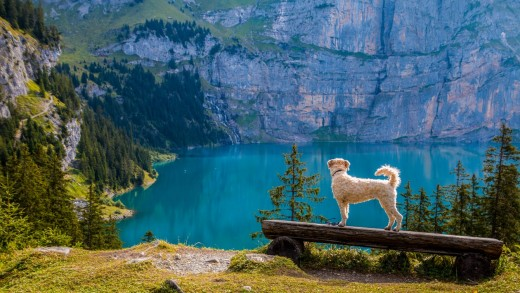 Cute dog and a scenic lake