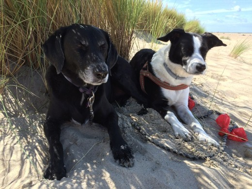 Dogs resting at a sandy beach