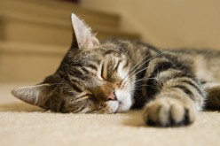A Short Analysis of Our Pet Cats and Their Obscure Behaviour