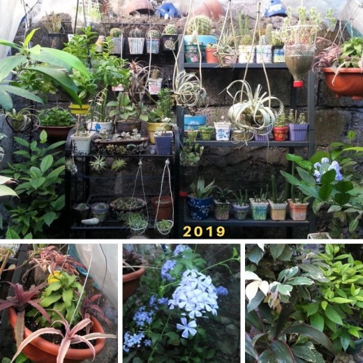My small garden currently (2019) | It's a mix of regular garden plants, air plants and succulents