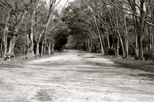 Tadasu Forest