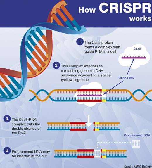 Pic: How CRISPR-Cas9 works