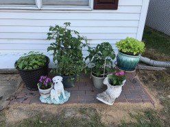 Decorating Your Front Yard With Vegetable Plants