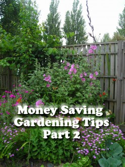 Money Saving Gardening Tips - Part 2