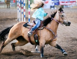 The Dixie Cowboys/Cowgirls And Their Horses