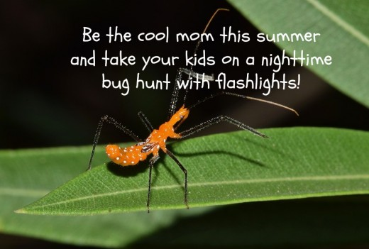 Preschoolers love going on nighttime bug hunts in their pajamas and slippers and with flashlights. Invite some neighborhood friends to come along on the adventure!