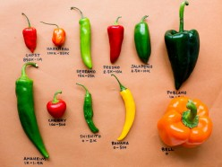 Chilies, How to Prepare and the Different Varieties to Choose from