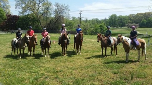 A group of good looking horses if I do say so myself!