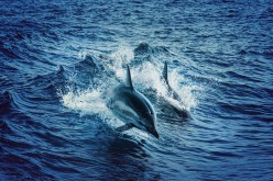 Animal Lovers: Here is The Real Way That You Can Help to Protect Our Oceans Wonderful Sea Creatures