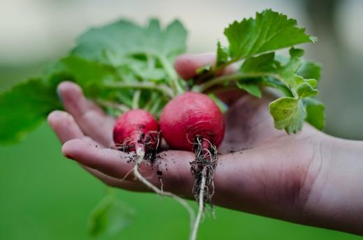 Home-grown veggies taste best!