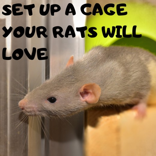 A comfortable and stimulating rat cage will keep your rats happy, healthy, and occupied while you are busy.